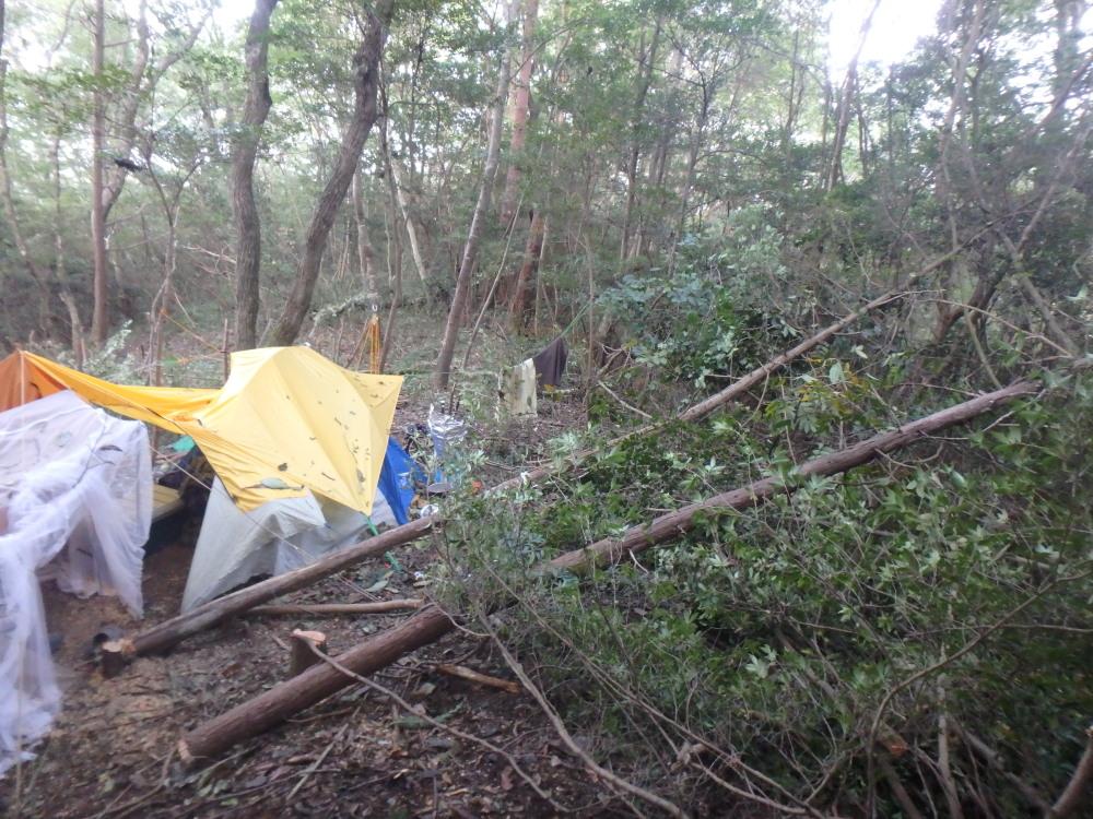 山林内で初めてのチェーンソー伐採(2016年9月上旬)
