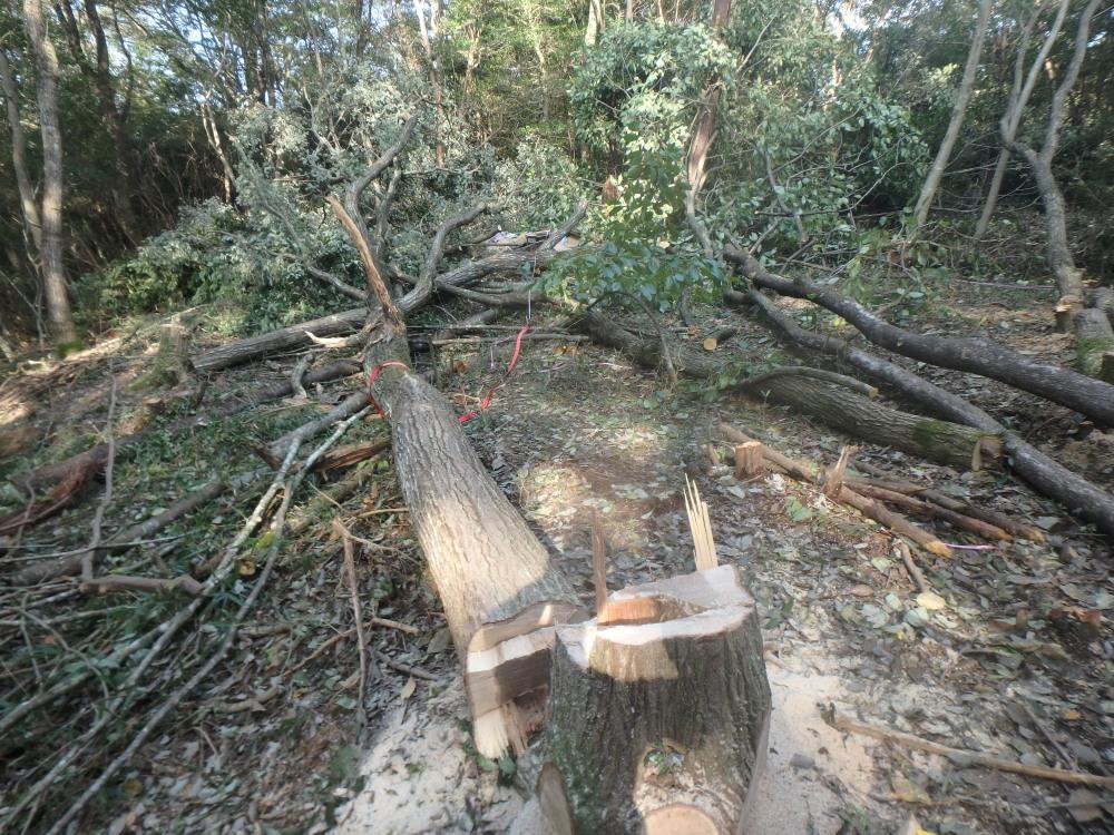 山小屋建築と進入路造成のための開拓伐採、終了(16年10月6~8日)