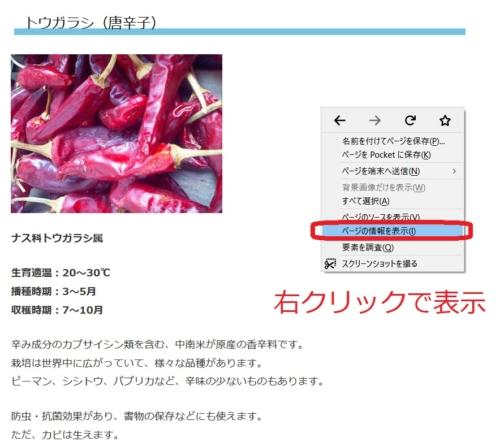 ページの情報を表示